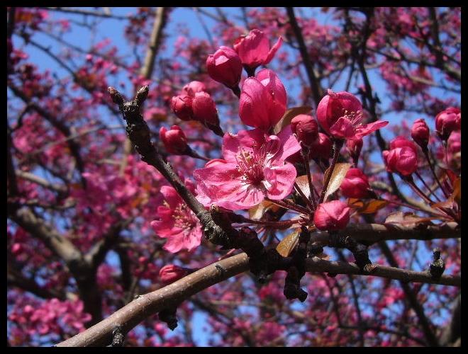 ■街角の花(PARIS)_a0008105_18353874.jpg