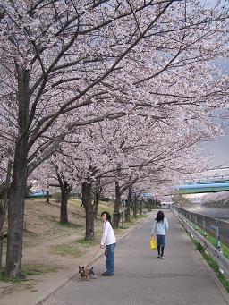 今年も 桜が咲いた!_d0092605_140258.jpg