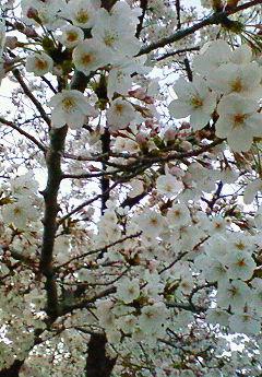 春ご飯♪_f0116812_18571057.jpg
