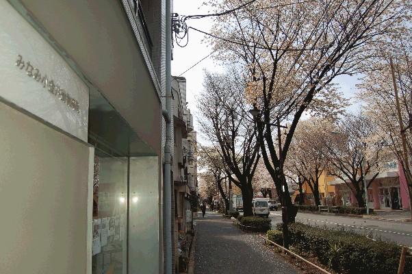 新小金井街道桜トンネル_a0019819_1853438.jpg
