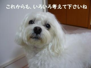 f0005727_16464611.jpg