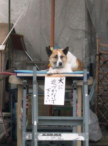 関西オフ会 at 京都 後編_b0025947_19562811.jpg