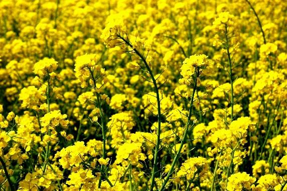 花のある風景_b0093754_23391112.jpg