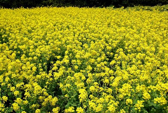 花のある風景_b0093754_2339141.jpg
