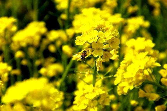 花のある風景_b0093754_23392187.jpg
