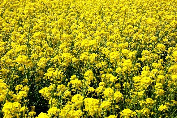 花のある風景_b0093754_23393099.jpg