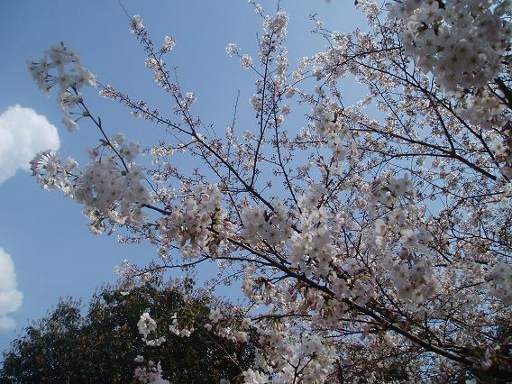 花見_d0061857_18101967.jpg