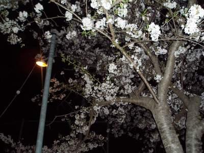 夜桜_a0077071_7463537.jpg