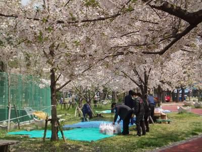 夜桜_a0077071_803340.jpg