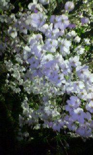 桜_c0079892_21295359.jpg