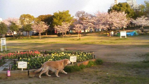 4/4 花冷えの一日でした_a0098418_0315161.jpg