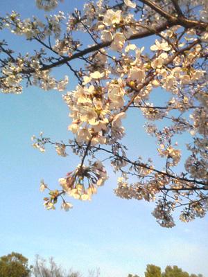4/4 花冷えの一日でした_a0098418_034362.jpg