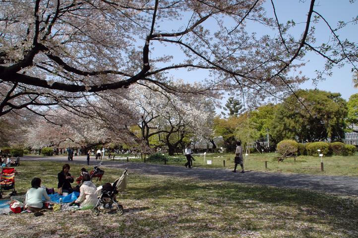 桜舞い散る小石川植物園_f0012718_2283977.jpg