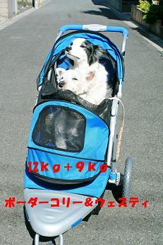 b0085331_200213.jpg