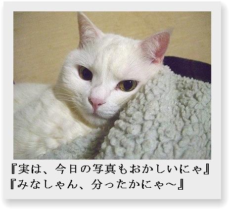 b0097145_06551.jpg