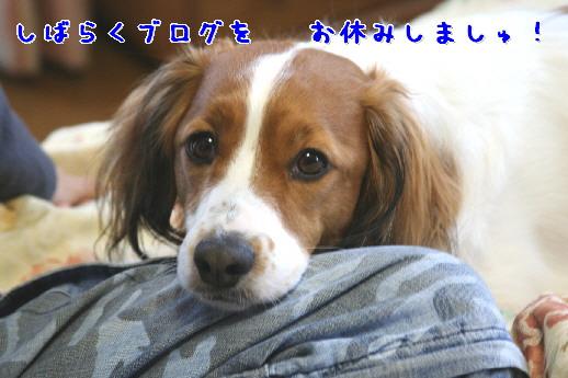 d0013149_10471621.jpg