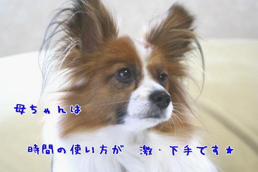 d0013149_1113393.jpg
