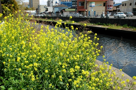 川のある風景_b0093754_23465893.jpg