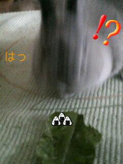f0104057_206863.jpg