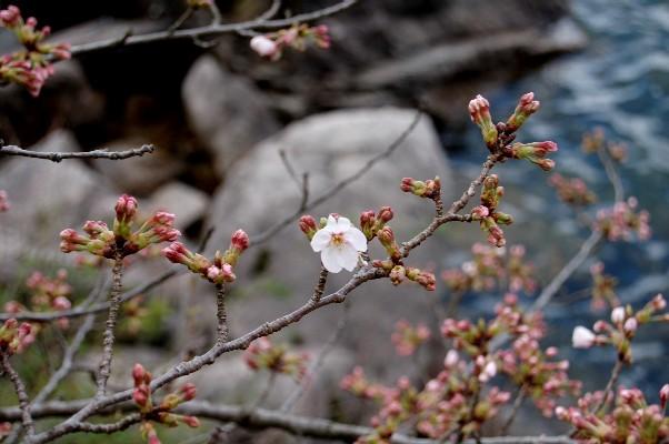 奥琵琶湖               4月3日_c0009275_0581985.jpg