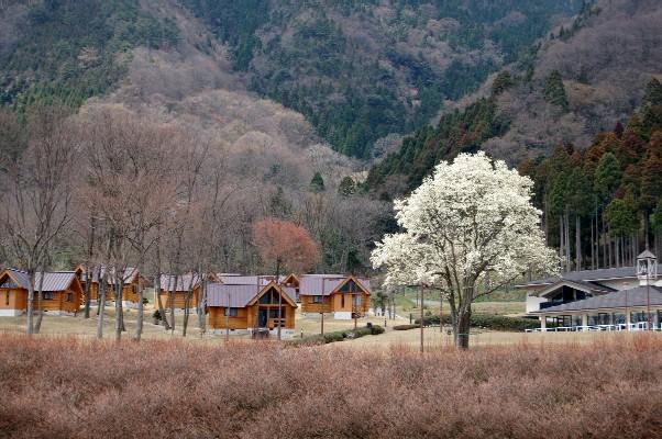 奥琵琶湖               4月3日_c0009275_0592477.jpg