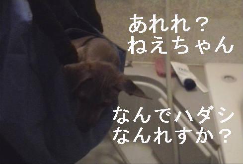 f0123589_15151777.jpg