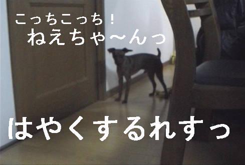 f0123589_1635312.jpg