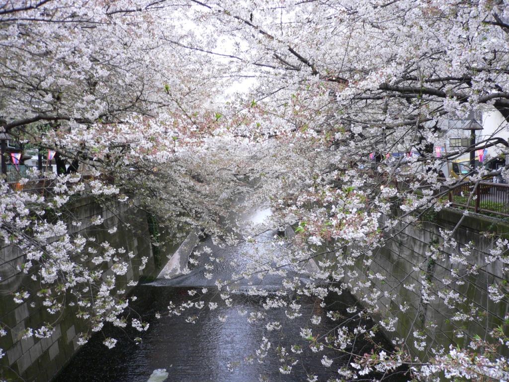 4月に雪!_d0088196_1305513.jpg