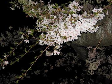 闇の桜花・猛霊の国_e0016517_19172166.jpg