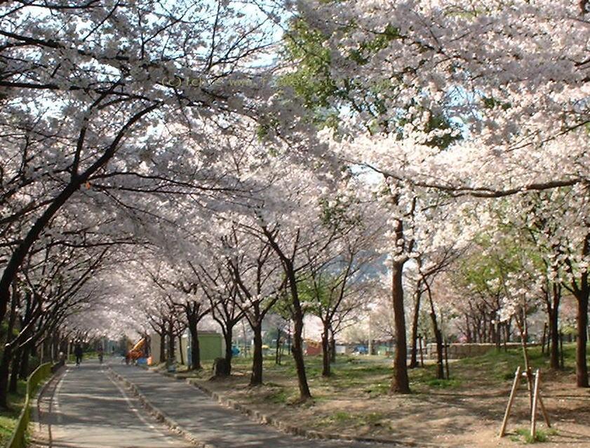 葉桜_a0042928_5373238.jpg