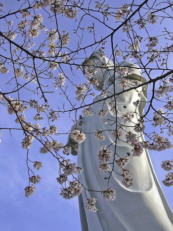 4月6日 多胡の古碑と観音山の桜_a0001354_19544254.jpg