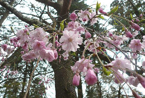 春の湯布院  亀の井別荘・天井桟敷。 *。:☆.。†  _a0053662_14492698.jpg