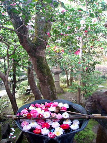 京都 法然院_e0048413_22351526.jpg