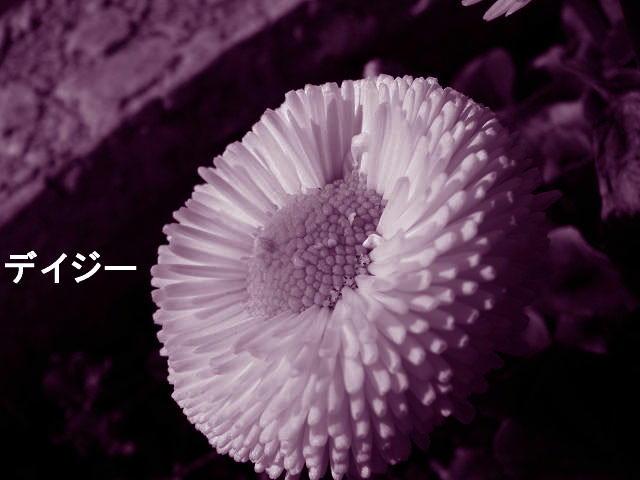 f0099535_7203861.jpg