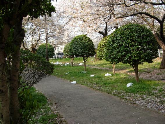 桜の満開の下・・・は?_c0035838_15382065.jpg
