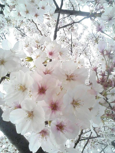 お花見して来まちた♪(画像多し)_e0013944_043666.jpg