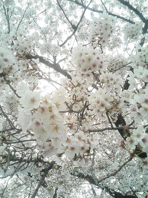 お花見して来まちた♪(画像多し)_e0013944_0444813.jpg
