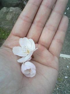 お花見して来まちた♪(画像多し)_e0013944_056227.jpg