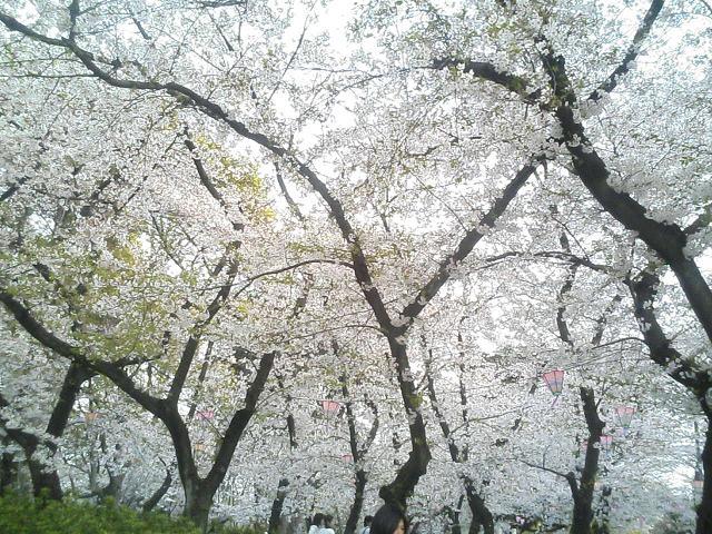 お花見して来まちた♪(画像多し)_e0013944_119198.jpg