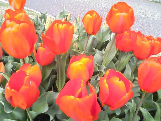 お花見して来まちた♪(画像多し)_e0013944_1233923.jpg
