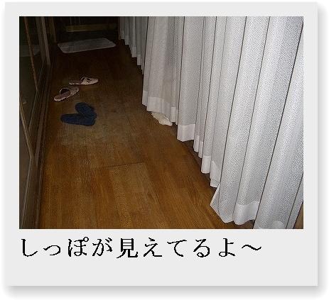 b0097145_085221.jpg