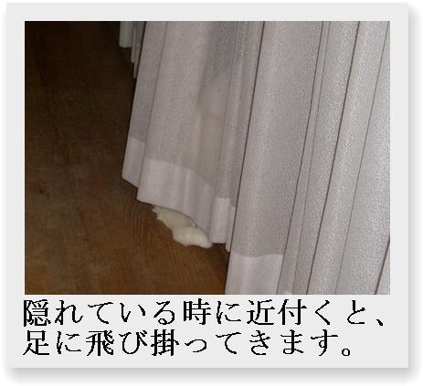 b0097145_091857.jpg