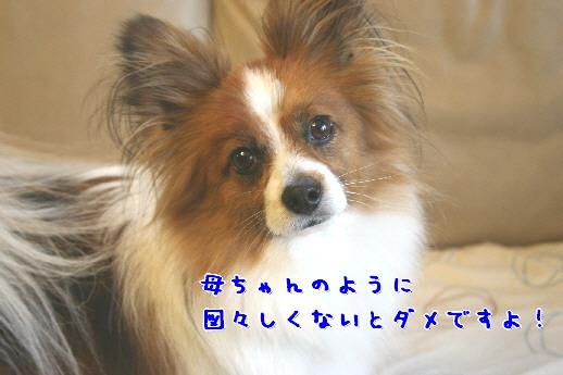 d0013149_95017.jpg