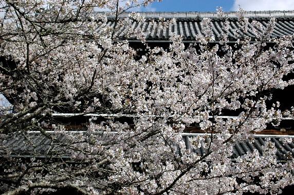 花のある風景_b0093754_112045.jpg