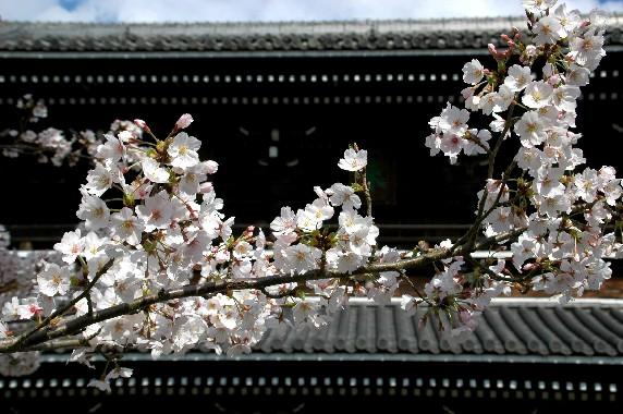 花のある風景_b0093754_113213.jpg