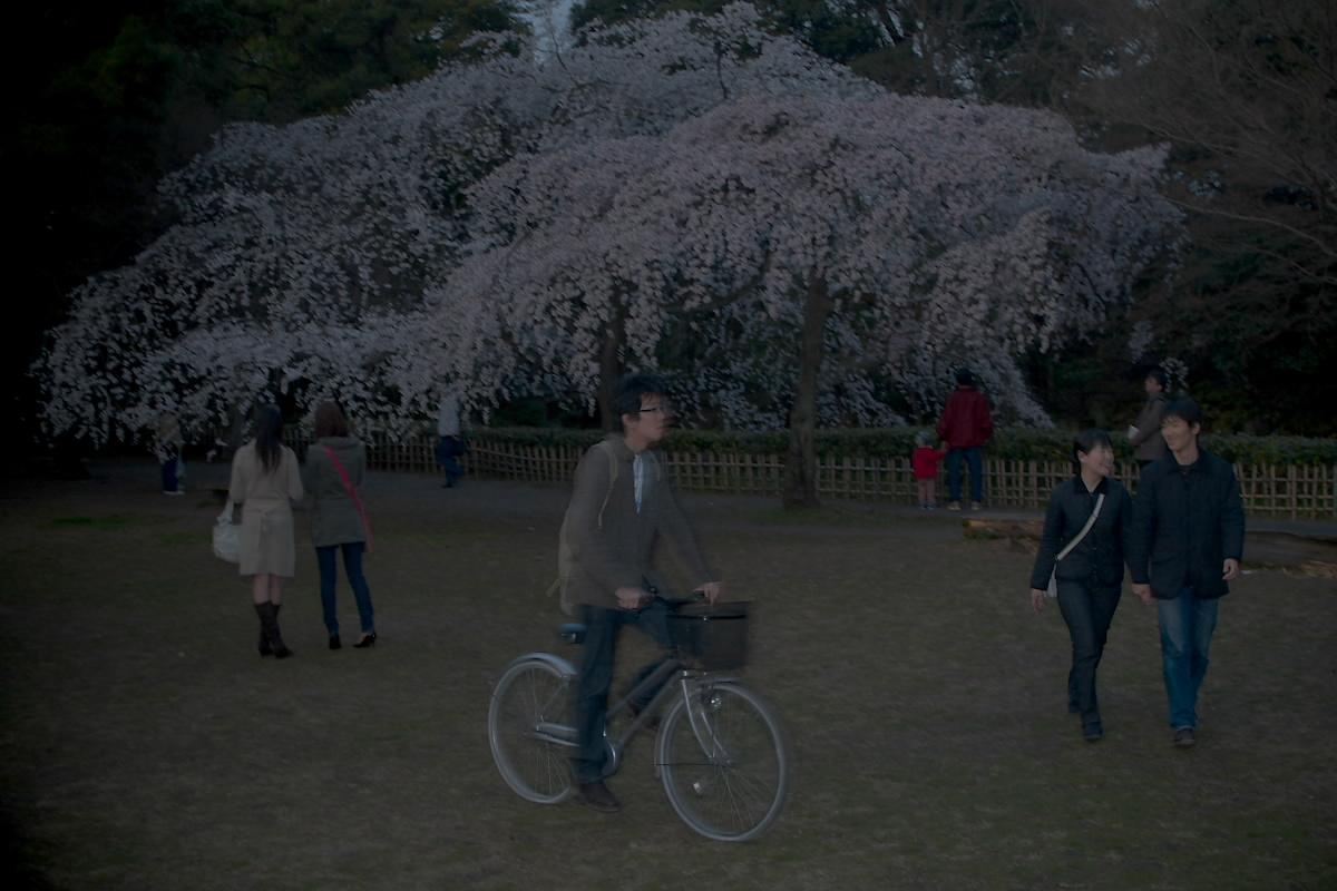 京都御所 桜_f0021869_2128112.jpg