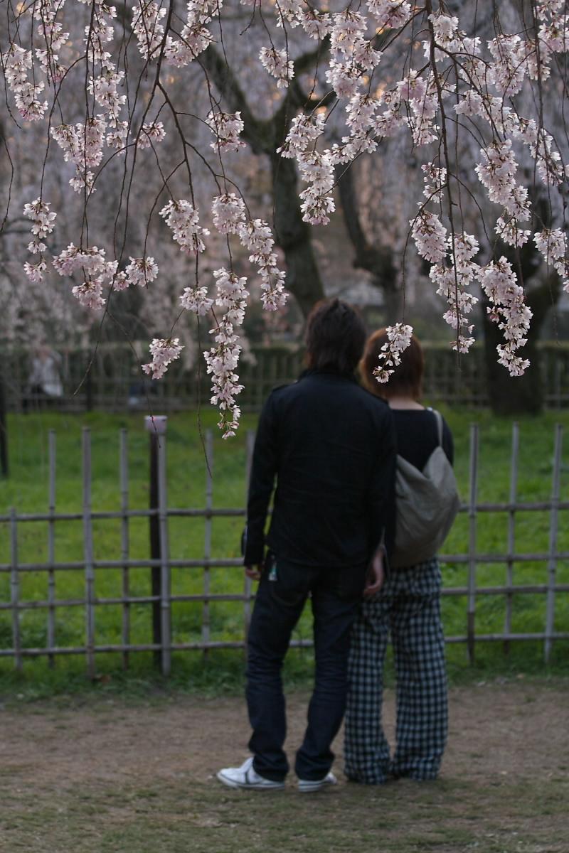 京都御所 桜_f0021869_9333413.jpg