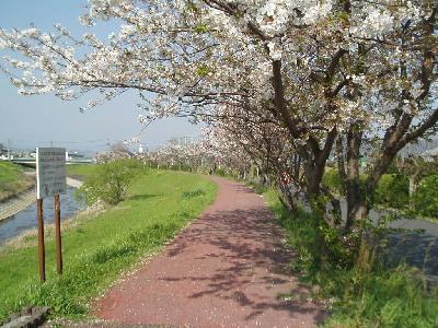 桜舞い散る_a0077071_17493168.jpg