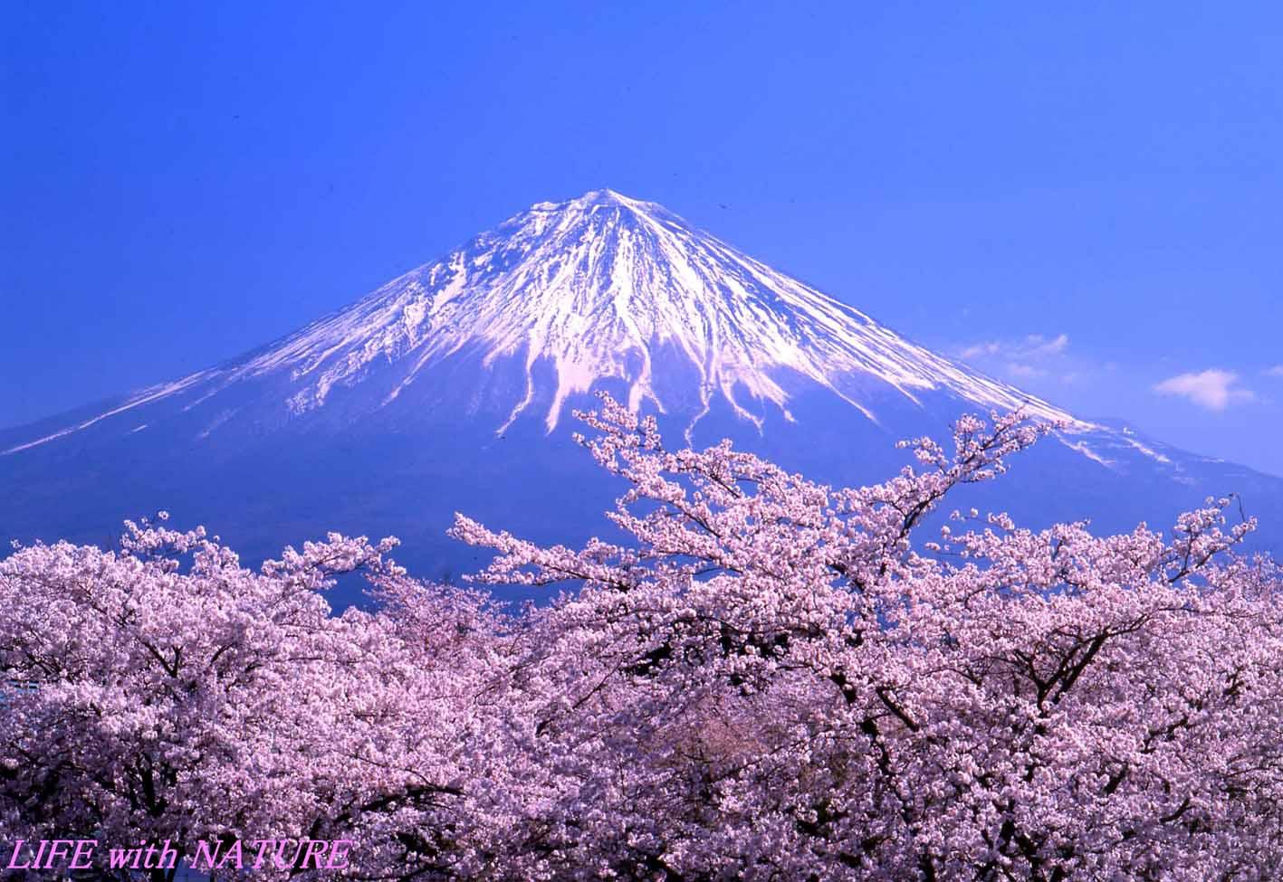 日本の春_b0093088_939562.jpg