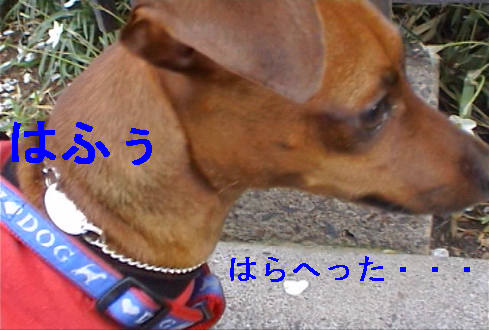f0123589_168555.jpg